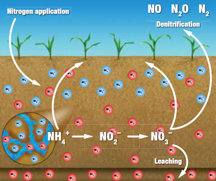 nutrient leaching